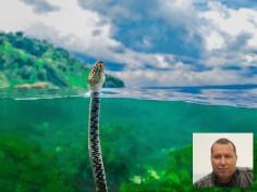 Варненец спечели световен конкурс за подводна фотография