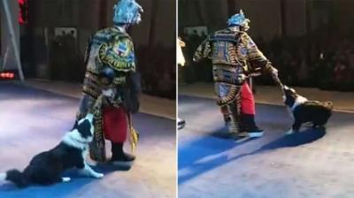 Видео: Куче захапа оперен певец по време на спектакъл